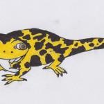 Der Salamander